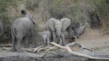 elefantes africanos video