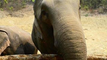 Elefanten füttern