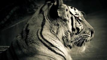 tigre con gli occhi arancioni luminosi