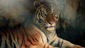 tigre che si distende nella grotta buia con raggi di sole