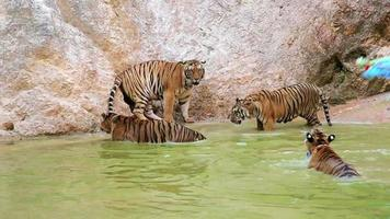 persone con il tempio della tigre, bangkok, thailandia