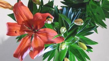 timelapse vie de fleur