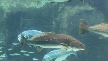 affichage de poissons d'aquarium video