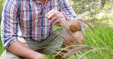 sorridente escursionista uomo guardando la pianta