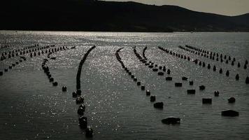 Fazenda de peixe video