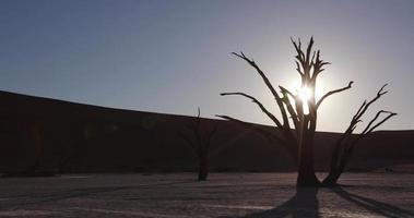 4k Schwenkaufnahme von toten Bäumen mit Sonnenuntergang im Hintergrund innerhalb des Namib-Naukluft-Nationalparks