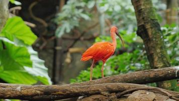 Exotic tropical birds in the trees - Scarlet Ibis and Heron