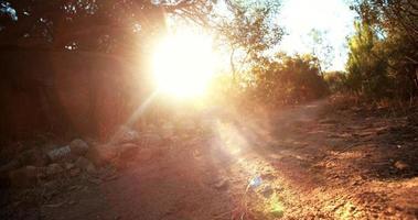 abenteuerlustiger Mountainbiker auf Feldweg eines Offroad-Trails