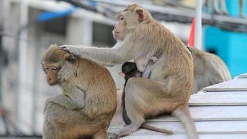 scimmie di famiglia