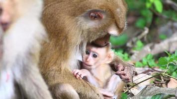 Affenfamilie.