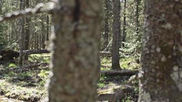 Mann, der Bach im grünen Wald überquert