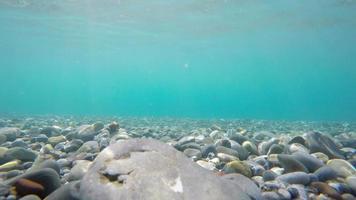 lapso de tiempo de escena submarina, 4k