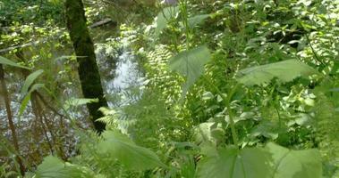 beaucoup d'herbes près du marais 4k fs700 odyssey 7q