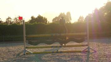 cavalo saltando obstáculo ao pôr do sol,