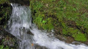 riacho fluindo pela floresta, costa rica video