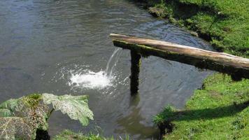 água caindo em lagoa de peixes nadando, costa rica