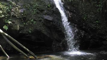 Landschaftsansicht des Wasserfalls in einem Wald, Trinidad, Trinidad und Tobago video
