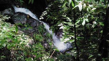 Vue grand angle de la cascade dans une forêt, Trinité, Trinité-et-Tobago
