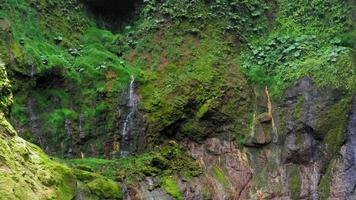 Vue de la cascade en forêt, costa rica