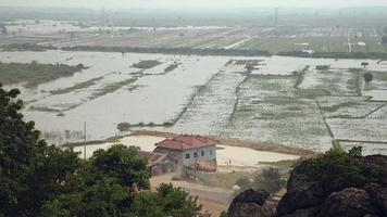 Upper view of flooded paddy fields