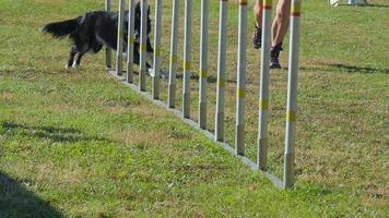Agilität des Hundes, Stangen weben video