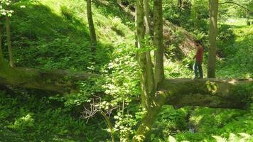 man die bizarre brugboom kruist in de botanische tuin van Batumi