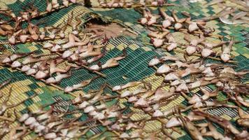 mosche che si nutrono di rane morte che si seccano su una stuoia