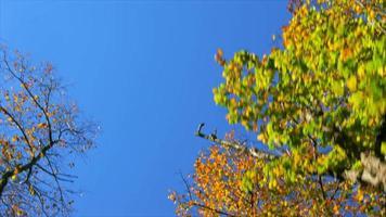 lado do campo no outono video