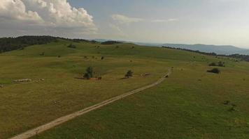 vista aérea de paisagem gramada com árvores video