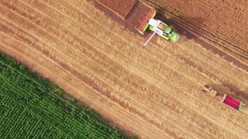 varna, bulgaria - giugno 06.2016: mietitrebbia per la raccolta del grano claas rapid 450 tucano harvester. mietitrebbiatrice in azione sul campo di grano, scarico dei chicchi video