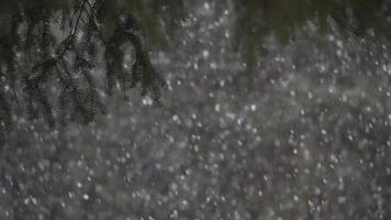fortes chutes de neige sous le pin