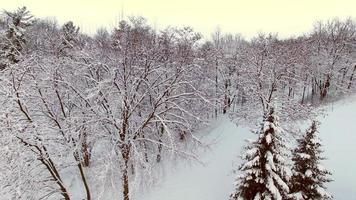 bellissimi alberi della foresta ricoperti di neve fresca di bufera di neve