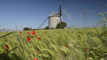 Windmühle auf dem Land video