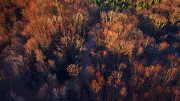 alba aerea guardando in basso sul paesaggio di alba, fiume, alberi sempreverdi video