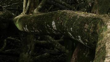 Hormigas cortadoras de hojas en el parque nacional Cahuita 05