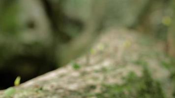 Hormigas cortadoras de hojas en el parque nacional Cahuita 07