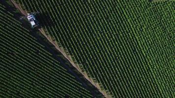 Vista aérea de los viñedos de champán, departamento de Aube, Les Riceys