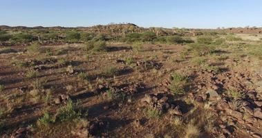 4k Luftaufnahme des Köcherbaums / des Kokerboom-Waldes in Namibia