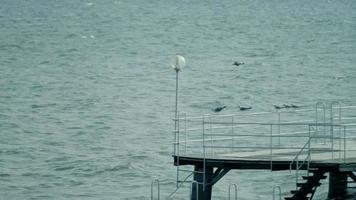 Flying seagulls above lake
