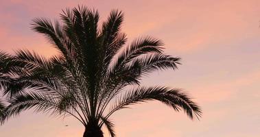tramonto cielo palma in alto vento in movimento 4K spagna video