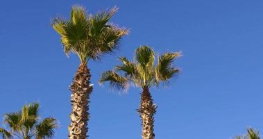 barceloneta journée ensoleillée plage palmiers vue 4k espagne