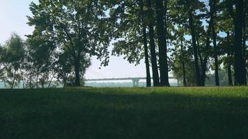 junger Sportler läuft die Strecke im Sommerpark. im Hintergrund ist die Brücke zu sehen, die das Auto verlässt