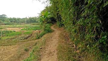 camminando su un sentiero fangoso curvo vicino a coltivare campo 4K