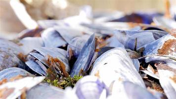 Pan shells eaten blue mussels
