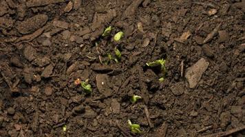 lapso de tiempo de semilla de cámara múltiple