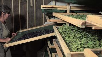 preparación y secado de flores y hojas