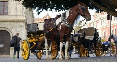 giro turistico di siviglia plaza hourse 4k spagna