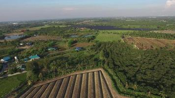 Aerial view of empty vegetable field in suburb area video