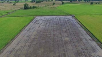 Aerial view of rice field ready for transplanting - Thailand video