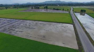Aerial view of rice field in Thailand video